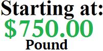 Coast pound